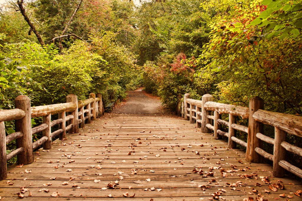 """""""A Bridge Into Autumn"""""""