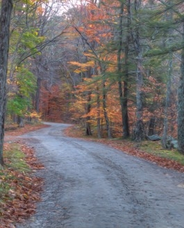 The Autumn Walk:  Macedonia State Park