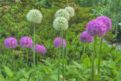 Flowers in Fort Tryon Park.