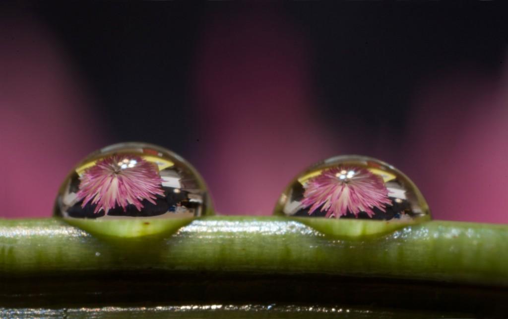 Purple-Flower-Drops
