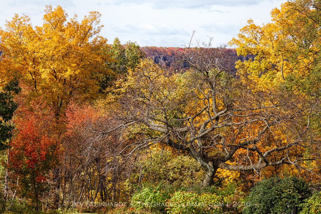 Autumn Color at Wave Hill, Bronx NY