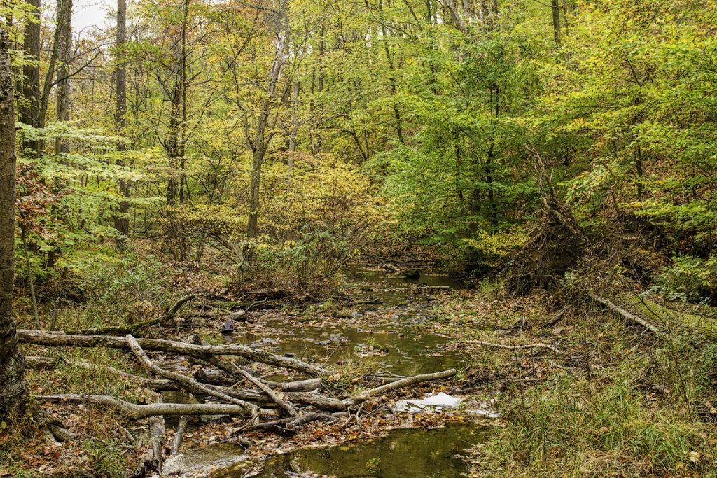 A stream in Hacklebarney State Park